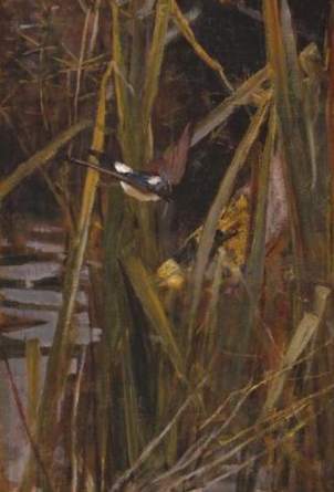 Waterhouse Shalott Reeds